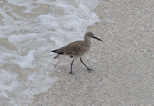 A bird, also on vacation in Florida