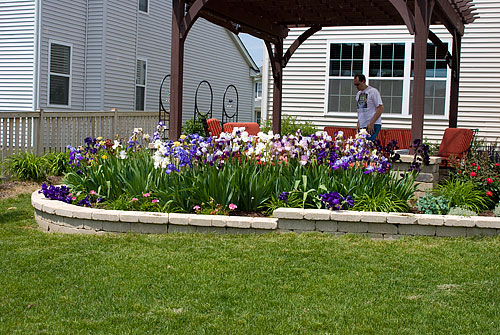 Another view of the iris bed