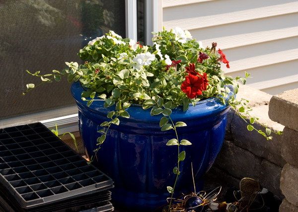 Our red, white and blue planter