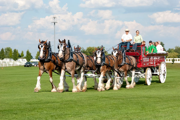 The Blackberry Farm Clydesdales parade the players across the field after the end of the game